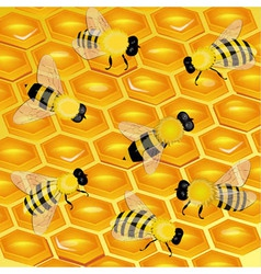 honeycomb with bees vector image vector image