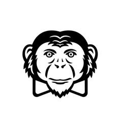 Noble chimpanzee chimp monkey primate or ape vector