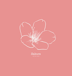 sakura flower hand draw sketch vector image