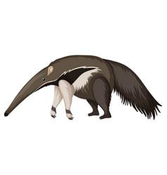 Anteater on white background vector