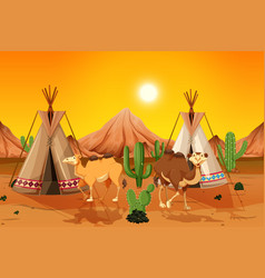 camels and teepee in desert vector image