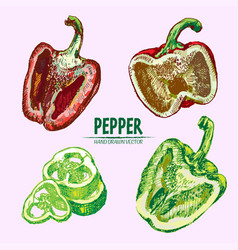 Digital detailed line art color pepper vector