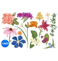 Hand drawn garden flowers set vector image