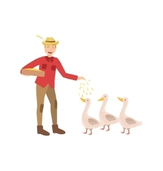 Man Feeding Three Geese With Seeds vector image