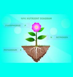 Npk nutrient diagram of plant vector
