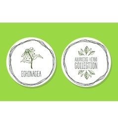 Ayurvedic Herb - Product Label with Echinacea vector