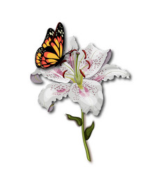 beautiful butterfly monarch sitting on the white vector image