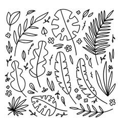 big floral set black hand drawn palm leaves vector image