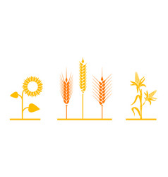 Fields of sunflowers wheat and corn vector