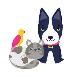 pet shop black dog cat and bird animals domestic vector image