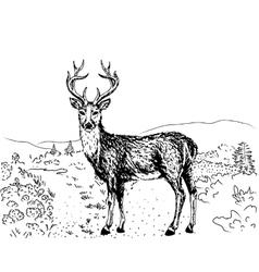 sketch reindeer vector image