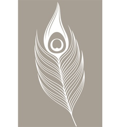White peacock Feather vector