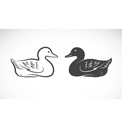 image of an duck vector image
