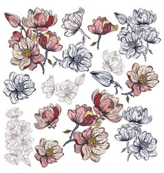 Big collection magnolia flowers for design vector
