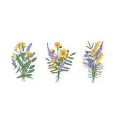 Collection of bouquets of beautiful wild meadow vector