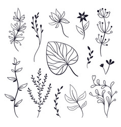 set leaves and plants vector image