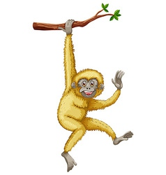 Gibbon vector image vector image