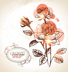 Vintage hand drawn floral background with rose vector image vector image