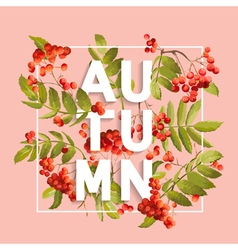 Rowanberry floral background autumn design vector