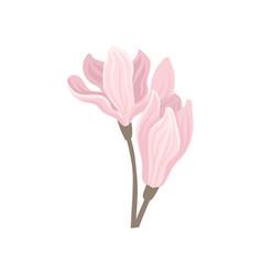 two gentle pink spring flowers beautiful vector image