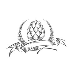image of hop and barley ear vector image