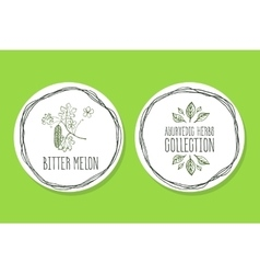 Ayurvedic Herb - Product Label with Bitter melon vector