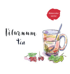 glass cup of viburnum tea vector image vector image
