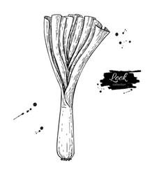 Leek hand drawn isolated vector