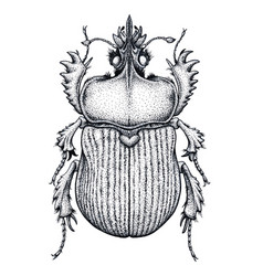 Scarab beetle tattoo dot work tattoo insect vector