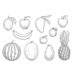 fresh exotic fruits sketch isolated icons vector image