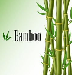 Bamboo text frame vector