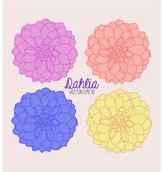 Dahlia Flowers vector