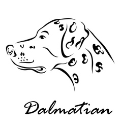 Dalmatian vector