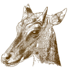 engraving of nilgai or blue bull vector image