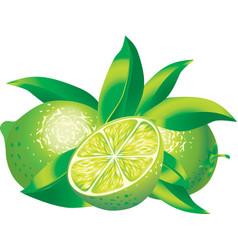 Limes vector