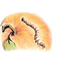 Mealworm vector