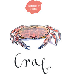 Serrated mud crab vector