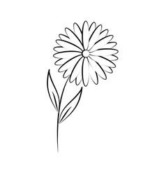 minimalist tattoo flower daisy nature line art vector image