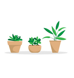 set of three potted plants vector image