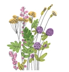 sketch of the wildflowers vector image