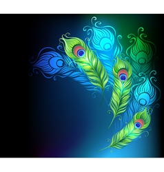 Bright Peacock Feathers vector image vector image