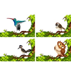Different wild birds on the branch vector image vector image