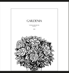 Hand drawn gardenia flowers in a pot background vector