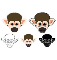 Squirrel monkey in face view vector