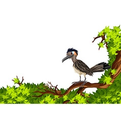 Wild bird standing on branch vector image