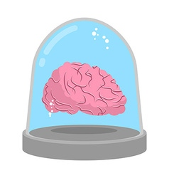 Brain in glass bell Laboratory research Study of vector image vector image