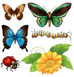 Different kind of butterflies and bugs vector image vector image