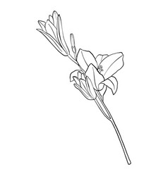 drawing flower vector image