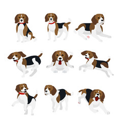 Set of cute and funny beagle vector