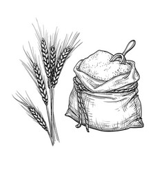 Wheat and sack flour vector